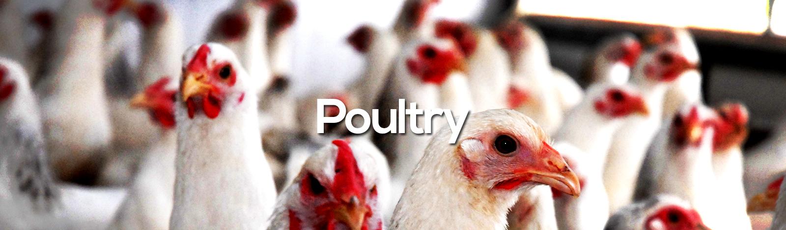banner-produtos_poultry